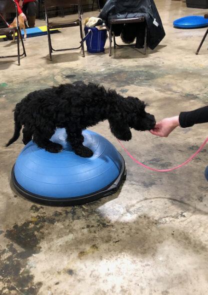 puppy training dubuque