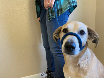 transitional leash for dogs